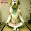 peacedog